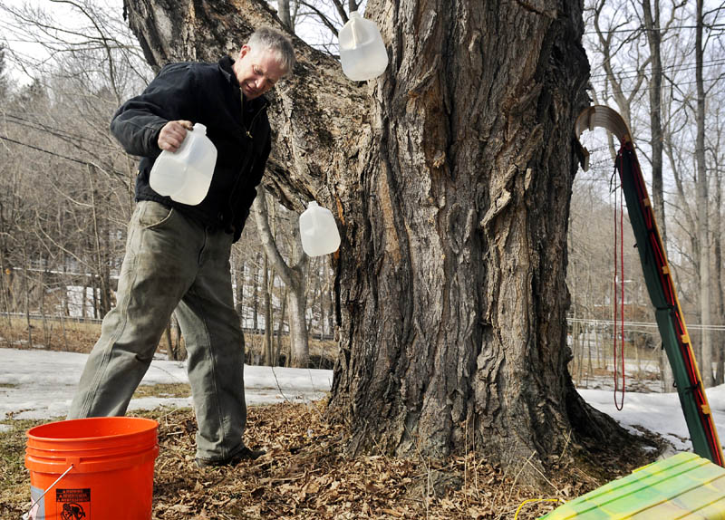 Fred Mitton, of Manchester, recovers sap Tuesday on a Maple tree he tapped in Hallowell. Mitton said most of the jugs he hung last week were full of the sweet stuff from afternoon runoff.