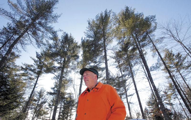 TREE PRESERVATION: Everett Towle is a retired forester who is working with the Three Rivers Land Trust, the Francis Small Heritage Trust and other organizations to create Forest Works!, a new program that aims to save larger tracts of forest land from development. Towle is photographed on a 50-acre parcel of land he owns in Hollis and manages as a forestry resource. The trees towering behind Towle are eastern white pines.