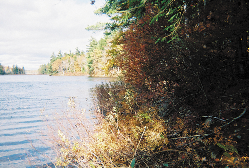 Public access to Hales Pond in Fayette, as seen from the Manter property on the eastern shore, is the goal of a fundraising effort now under way.