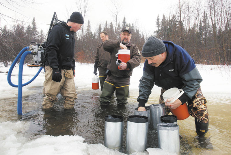PUTTING IN WORK: Paul Christman, a biologist with the Department of Marine Resources in Hallowell, places salmon eggs in a tributary of the Sandy River in Avon. With Christman are, from left, Jed Wright, with the Gulf of Maine Coastal Program, Craig Knights and Chris Domina, with U.S. Fish and Wildlife.