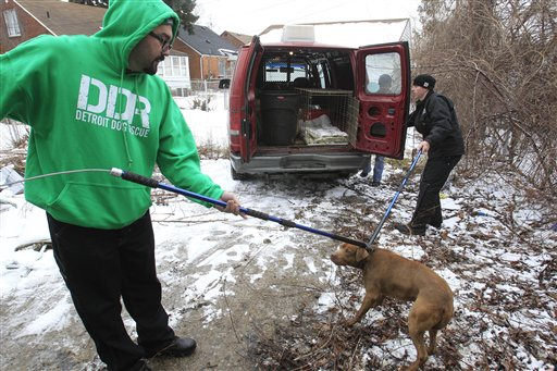 """Dan """"Hush"""" Carlisle, left, and Shance Carlisle of the Detroit Dog Rescue prepare to put a feral dog in a holding crate in Detroit recently."""