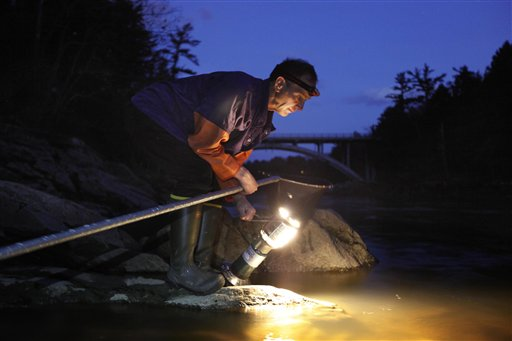 Bruce Steeves uses a lantern while dip netting for elvers on a river in southern Maine last week. Elvers are young, translucent eels that are born in the Sargasso Sea and swim to freshwater lakes and ponds where they grow to adults before returning to the sea.