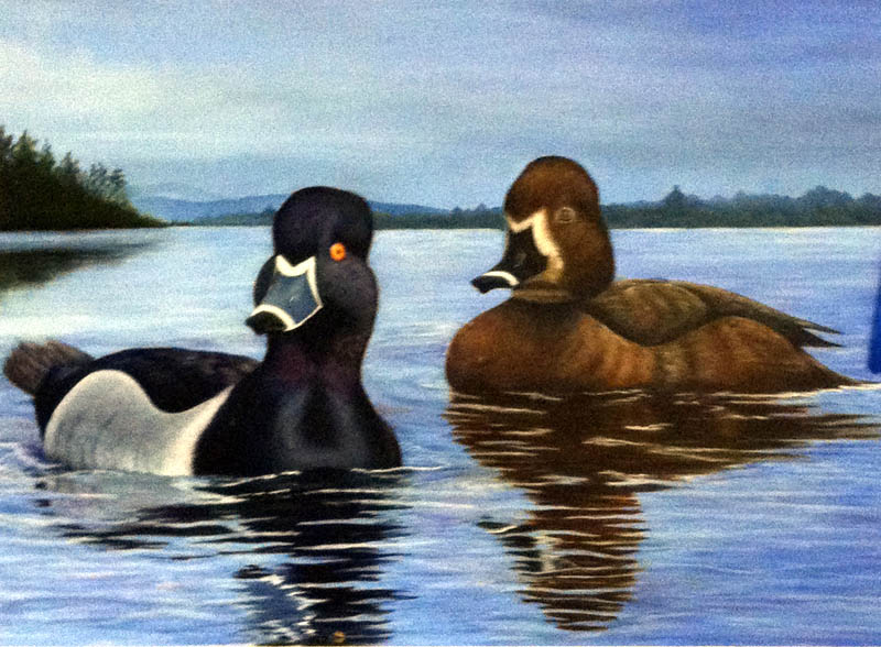 WINNER: An oil painting by a Skowhegan mother of two is the 2012 winner of the Maine Duck Stamp contest.