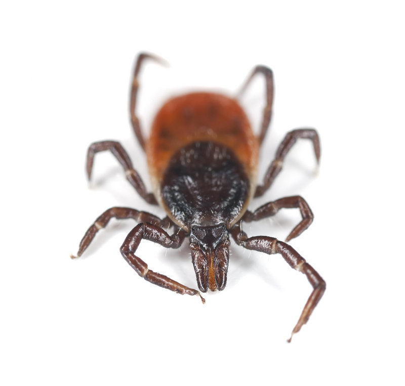 """Deer ticks are active when it's 40 degrees or warmer, so they've been out and about for a long time,"" entomologist James Dill said."