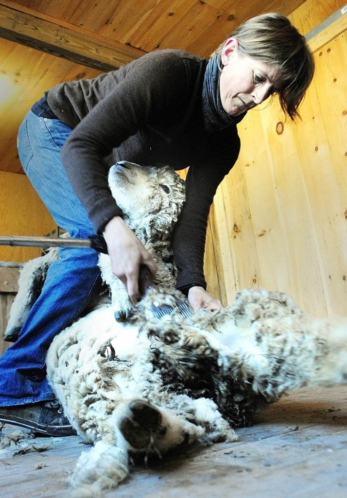 Gwen Hinman shears a sheep at Betty Stover's Spinnakees Farm on Friday in Augusta.