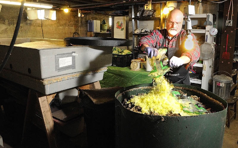 Jonathan Dyer feeds a bag of shredded lettuce to a tub of red wiggler worms at Black Gold Farms which he operates out of the basement of his Belgrade home.