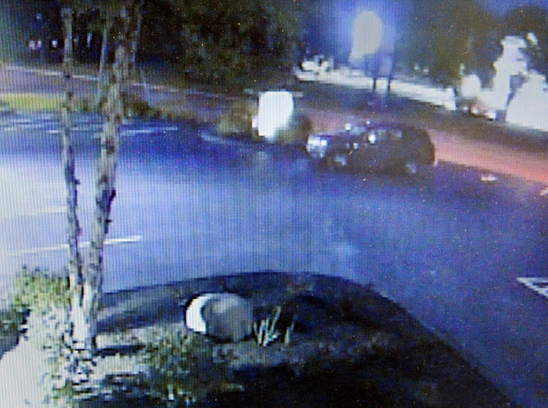 This video from Capital Area Federal Credit Union surveillance cameras shows a person getting out of a dark SUV and stealing several plants from a landscaping bed along North Belfast Avenue.