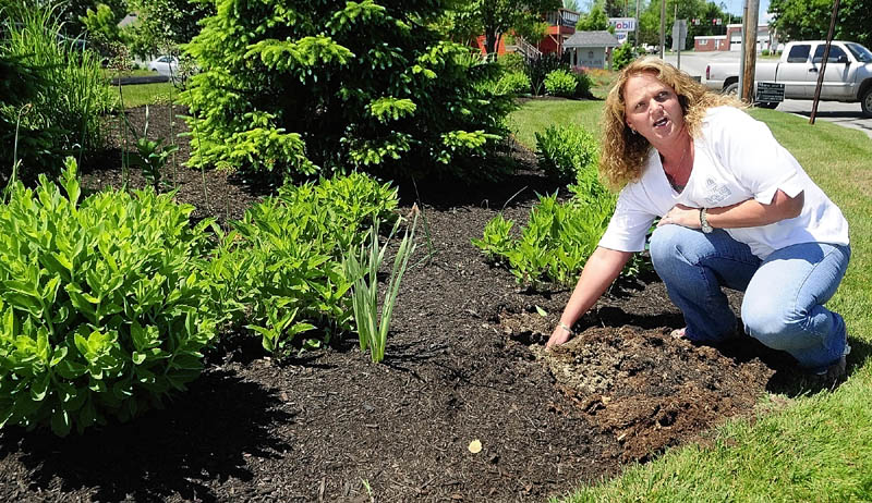Diana Winkley, president and chief executive officer at the Capital Area Federal Credit Union in Augusta, talks Friday about plant thefts that happened earlier in the week. Stolen were day lilies and bee balm in two different flower beds around the North Belfast Avenue building.