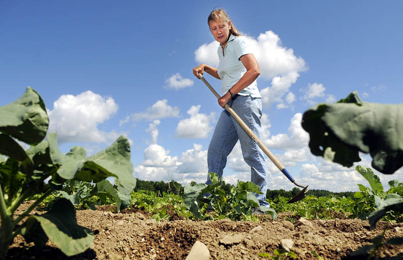 Diane Campbell hoes a row Tuesday at Wolf Creek Farm, in Sidney. Campbell has had to replant produce three times this year due to wet weather.