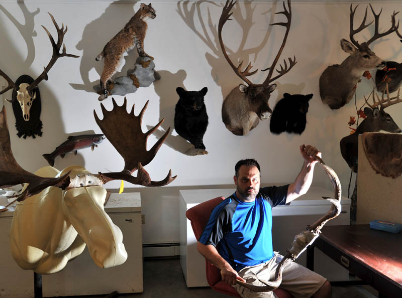 BACK AT IT: Sherm O'Brien reopened his taxidermy business, in a new location, after his old building was destroyed in a fire. O'Brien's new shop is located in Newport.