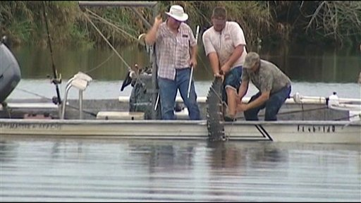 In this image made from video, an 11-foot alligator that attacked a swimmer is pulled from the water after it was killed Monday evening in the Caloosahatchee River near Moore Haven, Fla.