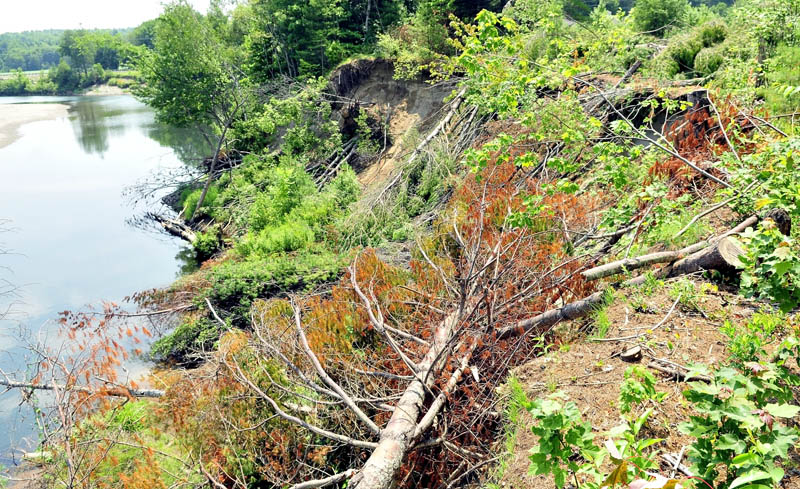 Trees have been cut down in an effort to help stabilize erosion between Whittier Road and Sandy Stream in Farmington.