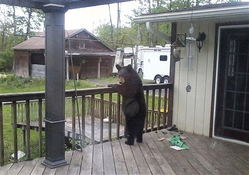 A bear searches a porch for food in Catskill, N.Y., recently.