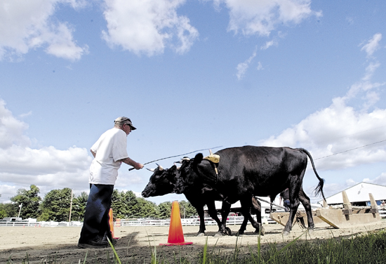 Staff photo by Joe Phelan Jesse Pierce, of Buckfield, leads his steers named Ringo and Cisco around the wood scooting course on Thursday afternoon at the Windsor Fair. Windsor feature