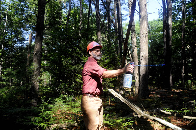 "Forester Harold Burnett marks a tree to harvest at the Georgia Fuller Wiesendanger Wildlife Protection Area in Winthrop. Burnett's firm, Two Trees Forestry, is overseeing a sustainable tree harvest on the land managed by the Small Woodlot Owners of Maine. ""We retain the best trees to get bigger and better,"" Burnett said of the timber stand improvement."