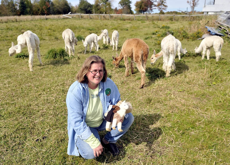 Jill McElderry-Maxwell holds products from her alpacas as her animals graze at her alpaca farm Bag End Suri Alpaca Farm in Pittsfield Friday. McElderry-Maxwell and her husband Bruce Maxwell own the farm and do a majority of their sales via internet.