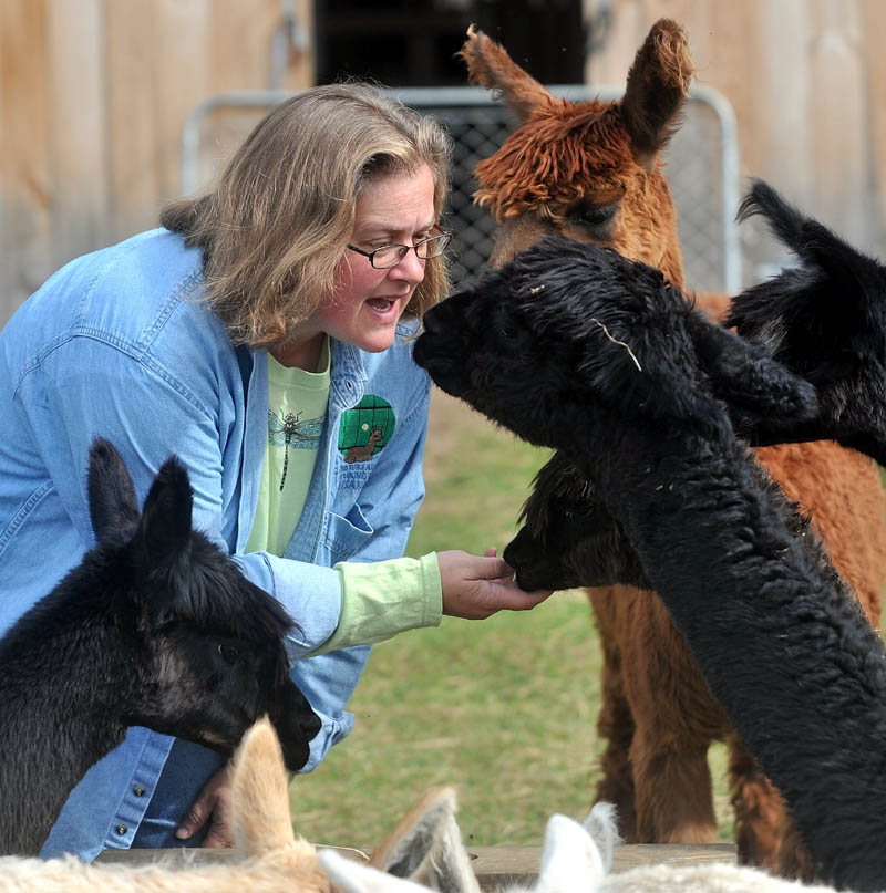 Jill McElderry-Maxwell interacts with her alpaca at Bag End Suri Alpaca Farm in Pittsfield Friday. McElderry-Maxwell and her husband Bruce Maxwell own the farm and do a majority of their sales via internet.