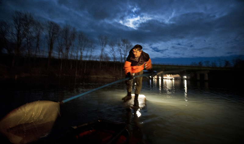 John Moore of Freeport fishes for elvers in a Southern Maine river on Thursday night, April 5, 2012. There has been high interest in elver licenses since last spring's eel-fishing frenzy, when fishermen were getting more than $2,000 a pound.