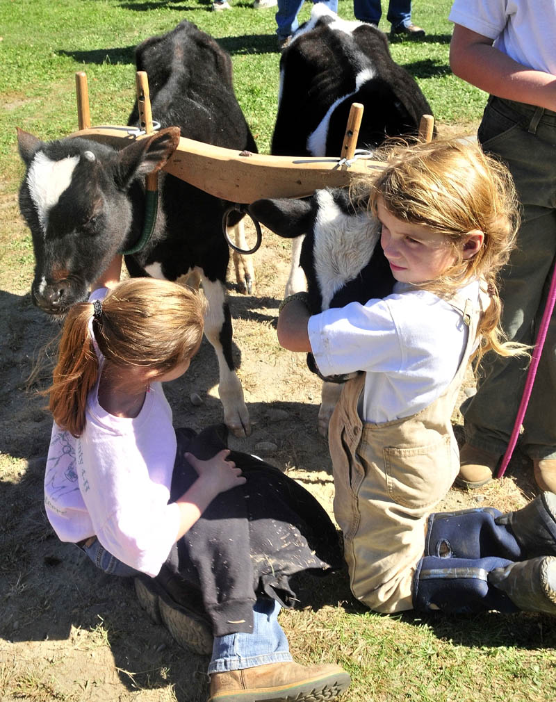 Lauren Robinson, left, and Sage Whitehead spend time with young steers that were about to compete with handler Mia Hofmann during the Farmington Fair on Monday.