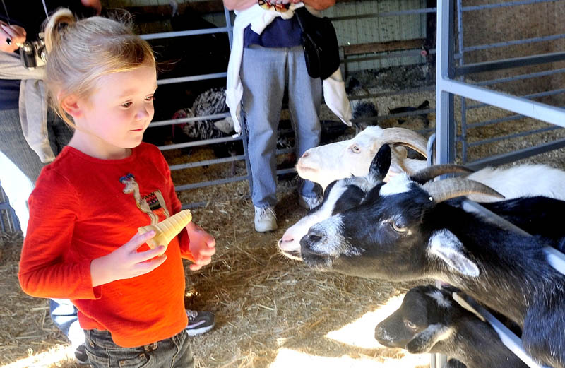 ONE AT A TIME KIDS: Kendra Moulton backs away from some hungry goats while feeding them grain in the livestock section of the Franklin County Fair in Farmington on Monday.