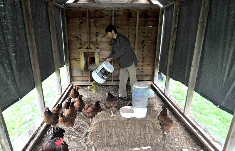 EAT UP: James Bannen feeds chickens leftover table scraps in a coop at Jean Rosborough's home in Vassalboro on Saturday morning.