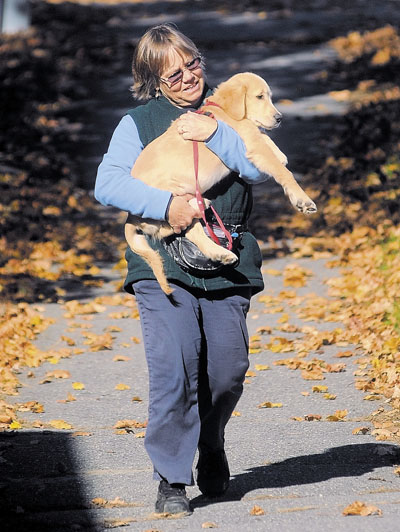 Beth Craigie, of Waterville, carries her 12-week-old golden retriever, Dewey, down West Street during their walk on Wednesday.