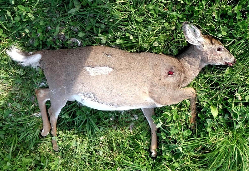 Contributed photo A $3,000 reward is being offered for information leading to the arrest of the people who killed four deer in the Somerset County town of Ripley.