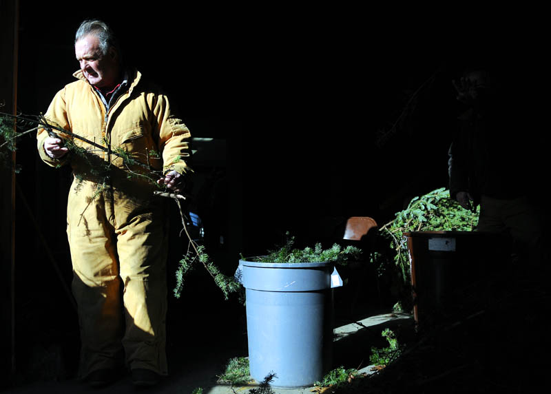 Jim Hawkes tips an evergreen tree Sunday at the Windsor Historical Society, during the annual wreath-making event.