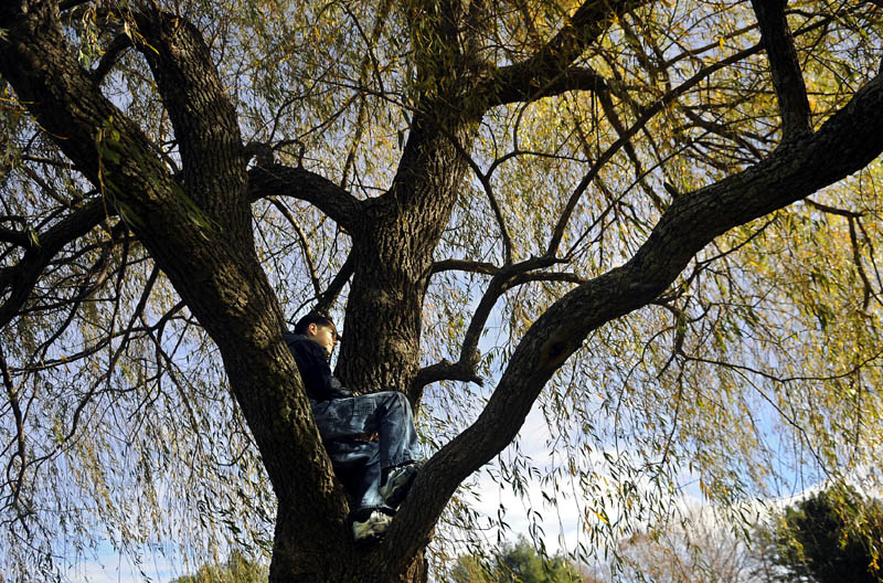 Percy Carey, 12, sits in a willow tree in Capitol Park in Augusta while waiting Sunday for his father, Jason, to take a picture. The Careys, of Belgrade, were taking family portraits on the mild fall day.