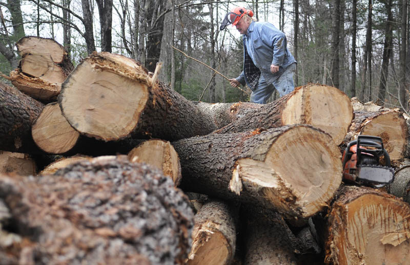 Forester James Peterson, of Rumford, measures pine logs for lumber Monday at a lot he harvested in Litchfield. The retired chemical engineer uses a cable skidder to twitch the pine to a yard where he determines which logs should be pulped and those that will be preserved for sawing.
