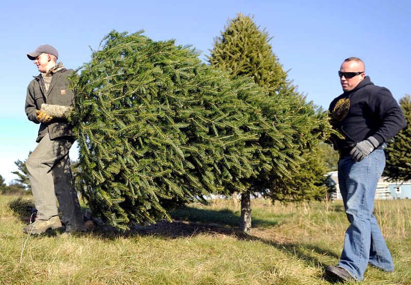 Dane Wing, right, and Aaron Moody lug a tree Monday they cut at Moody's lot in Pittston. Wing planned to put the evergreen up in his home for Christmas.