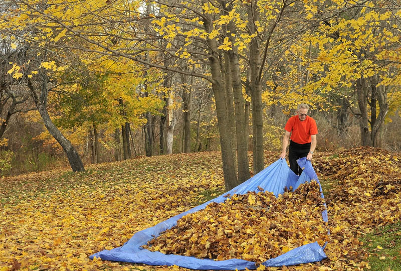 Maynard Weeks, 74, clears his property of leaves on West River Road in Waterville Friday. Weeks tackles the yard work every weekend until all of the leaves have shed the tree. He says chopping wood and raking his yard keeps him young and busy.