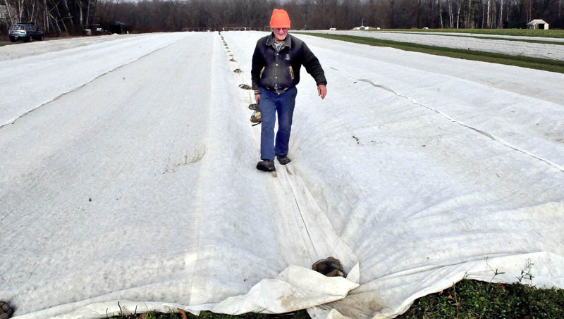 David Pike places stone weights on a large winter cover that protects strawberry plants at his farm in Farmington on Wednesday. Pike said the straw he once used as protection was costly and blew off in the wind.