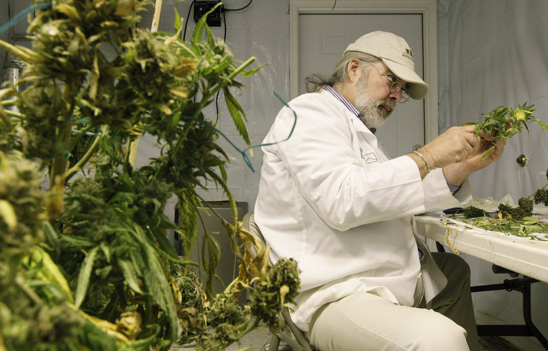Jake Dimmock, co-owner of the Northwest Patient Resource Center medical marijuana dispensary, prepares medical marijuana for distribution to patients last month in Seattle. Washington voters on Tuesday approved a measure to let adults over 21 buy taxed, inspected marijuana at state-licensed shops.