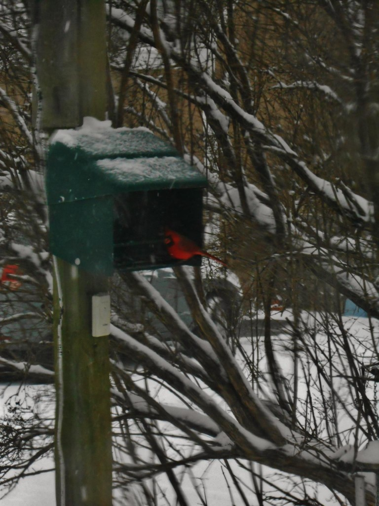 A cardinal knew the best place to weather Thursday's storm.