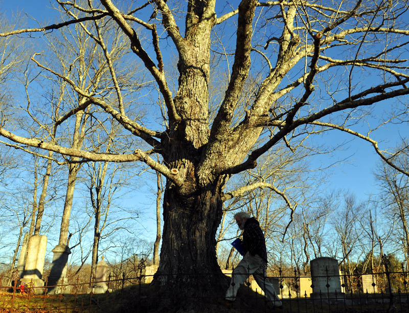 """Dan Howard of Augusta walks around a maple tree while searching for headstones on Sunday at a cemetery in Pittston. Howard, who described himself as """"just crazy"""" about genealogy, was attempting to locate two relatives who were interred in the 18th Century."""