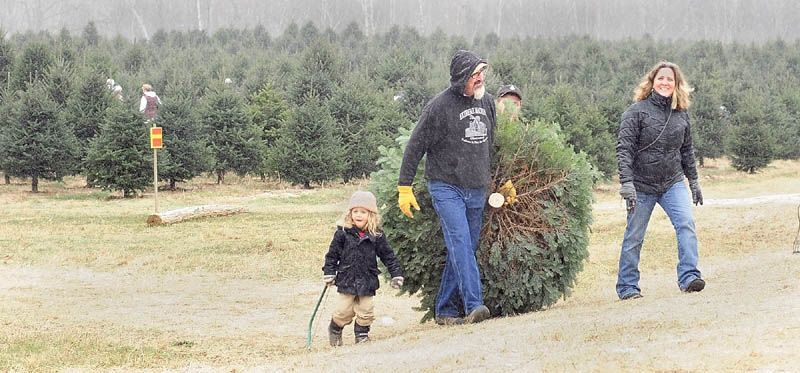Solomon Cyr, Ken Cyr, Luke Cyr (in background) and Mary Cyr, of Winthrop, carry their Christmas tree out of the field on Saturday afternoon at Frederickson's Tree Farm in Monmouth.