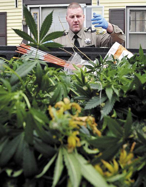 Kennebec County Deputy Sheriff Jacob Pierce takes an inventory Monday of marijuana plants collected seized at an apartment on Chamberlain Street in Augusta. Deputies seized over 100 plants and several pounds of processed marijuana from the residence, according to Detective Sgt. Frank Hatch.