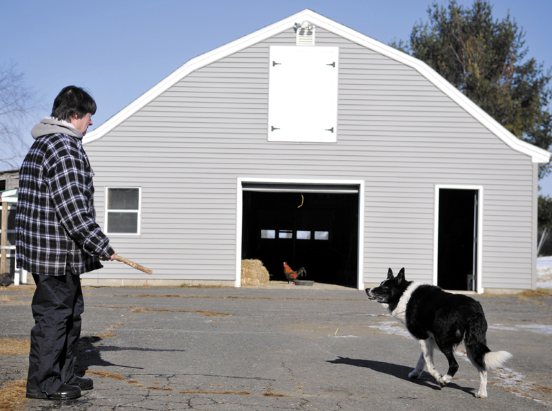 """Before tossing a stick for her dog Tuesday at her farm in West Gardiner, Dee Dee Douglas fed her egg roosters an extra cup of grain. """"All my animals are spoiled rotten,"""" she said of the horses, fowl and canine that reside at the farm."""