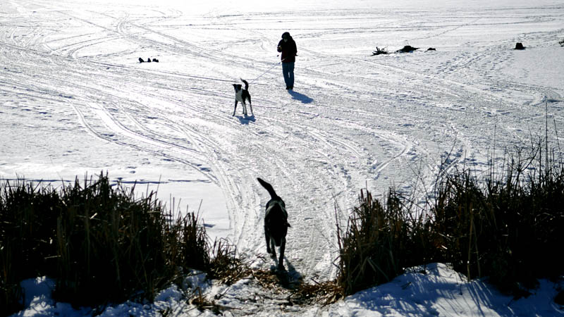 """Greg Safranski, of Brunswick, follows his dogs off the ice on Pleasant Pond in Richmond Tuesday. Safranski said the temperature was """"a bit chilly,"""" but that every walk across the Pond is """"lovely."""""""