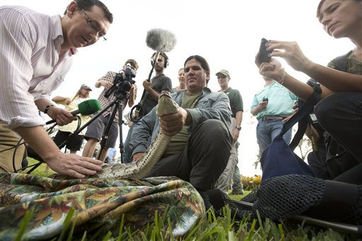 "Reporters pet and take photos as Capt. Jeff Fobb of the Miami-Dade Fire Rescue's Venom Response Unit holds a python during the kickoff ceremonies for the ""Python Challenge"" on Jan. 12, 2013."