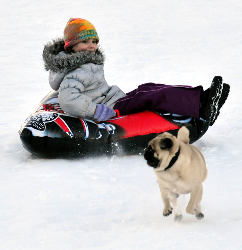Duke keeps an eye on Julia Lawe while charging ahead of her and others who were enjoying some sledding at Colby College in Waterville on Tuesday.