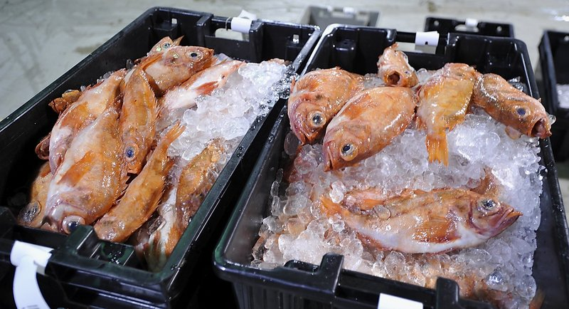 A fresh catch of groundfish lament their future as they await the auction at the Portland Fish Pier in March 2011. New England fishermen will have to wait several more weeks, at least, to learn whether Congress will provide federal aid to the region's struggling groundfishing industry.
