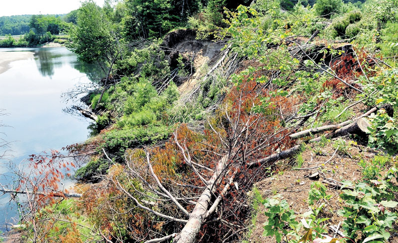 Trees have been cut down in an effort to help stabilize erosion between Whittier Road and Sandy River in Farmington. T