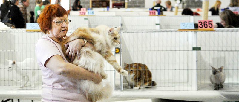 Susan Tessier lugs a Maine coon cat she showed Sunday during the Nauticats Cat Show in Augusta. Over 150 cats competed in 20 different events in the show that commenced Friday. Tessier traveled from Quebec to have her feline judged.
