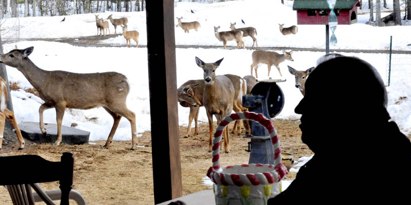 Basil Powers is seen inside the kitchen at his Coplin Plantation farm, as deer look for food in his yard.