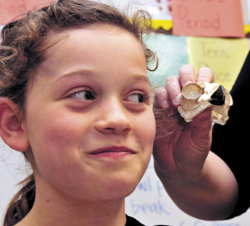Bloomfield Academy student Porcha Rowlett casts a weary eye toward the owl skull being shown by L.C. Bates Museum educator Serena Sanborn during a presentation on birds at the Skowhegan school on Thursday.