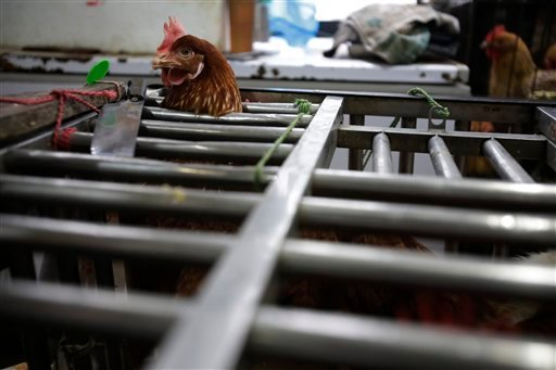 Chickens are seen at a cage as they are sold at a poultry market in Shanghai on Friday. Authorities carried out the slaughter of all poultry at a Shanghai market where the virus was detected in pigeons being sold for meat.