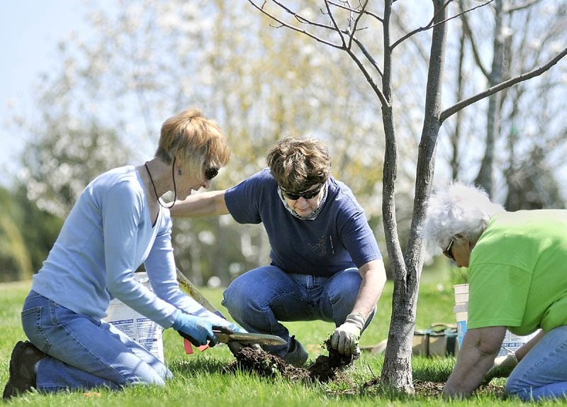 Volunteers, from left, Debbie Clarke, Jane Rau and Molly Wickwire dig weeds and grass out from around a magnolia tree on Tuesday at The Viles Arboretum in Augusta. There were several volunteers working on sprucing up the arboretum on Hospital Street.