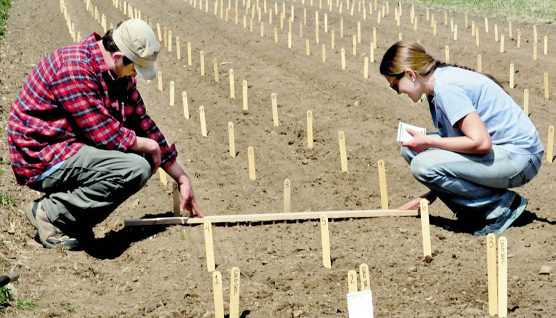 Steve Rodrigue and Lindsay Spigel plant an early season variety of corn at the research farm at Johnny's Selected Seeds in Albion on Monday. Workers have been busy tilling soils and planting seeds since the weather turned warmer recently.
